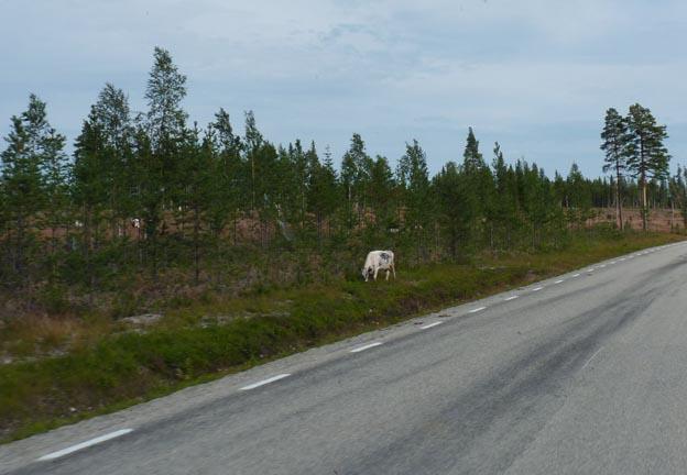 014 2013-08-03 023 Ljungdalen-Åsarna