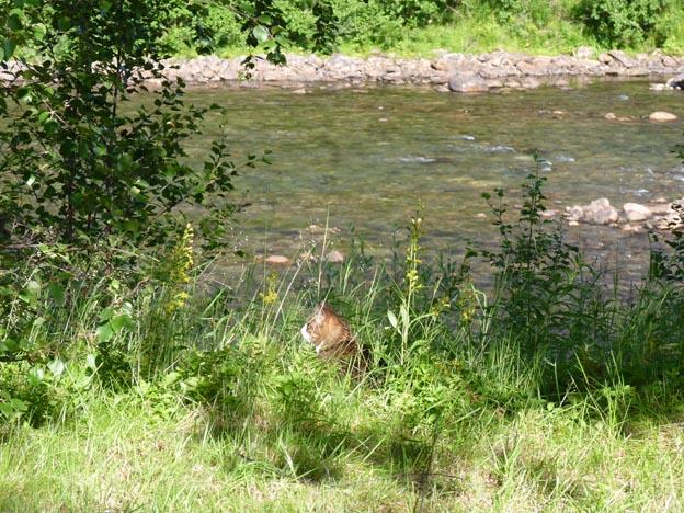 019 2013-07-26 019 E6 Krokstrand Camping