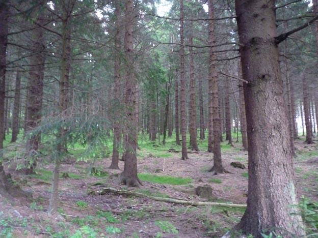 044 2014-06-30 080 Campingplatz Braunlage