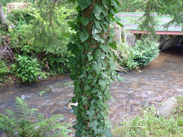 011 2014-07-10 033 Campingplatz Kinzigtal Steinach