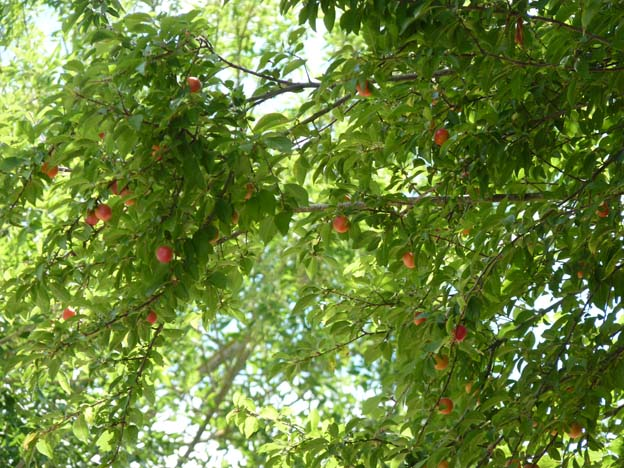 029 2015-07-21 007 Camping I'le de Offard Saumur Loire