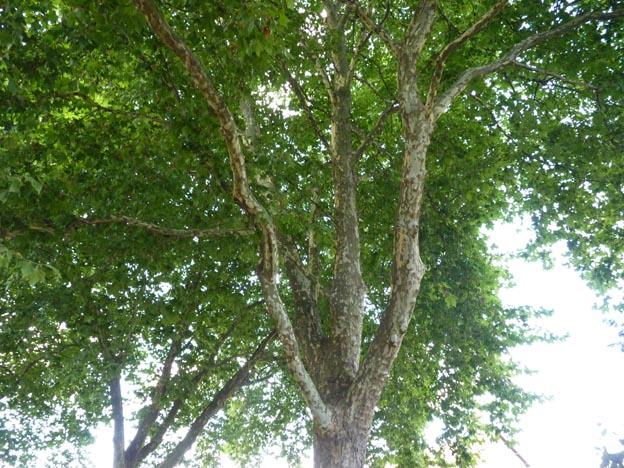 007 020 2015-07-23 030 Camping i Etang-sur-Arroux