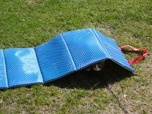 004 2015-08-03 002 Ulslev strandcamping