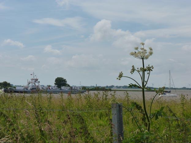 003 2016-07-17 003 Färja över Elbe