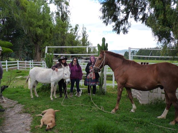 Åsnan, hästen, Patricia, Nidia och jag.