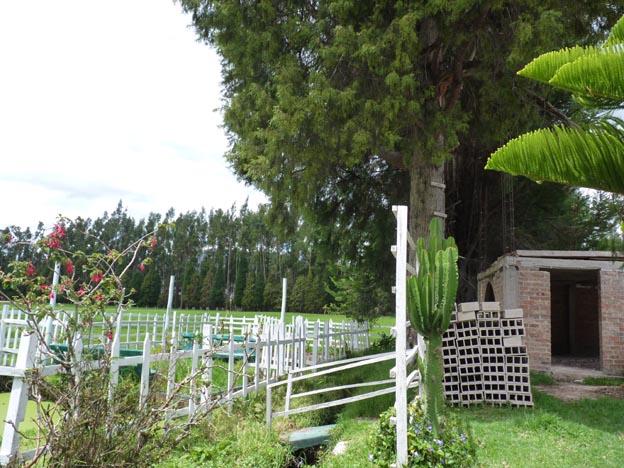 Hästhagen och en kaktus.